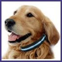 Pet Safety, Behavior and Training