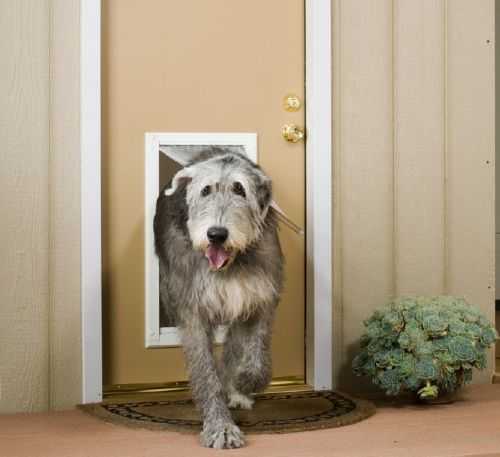 Dog Doors Cat Doors Endura Flap Pet Doors Patio Pacific Pet Doors