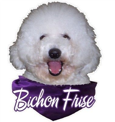 Bichon Frise Decal   Furrypartners