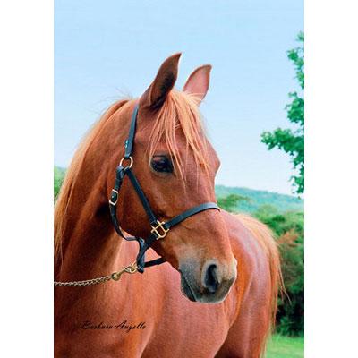 Chestnut Horse Decorative Flag