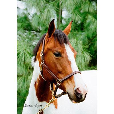 Paint Horse Decorative Flag